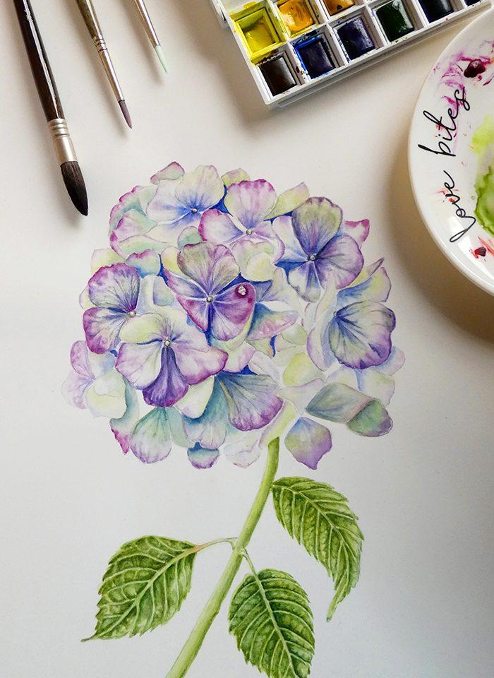 hortensia acuarela de Nancy Becerra Design