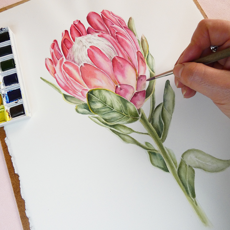 Protea en acuarela de Nancy Becerra Design